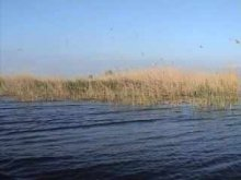 - Dunavat  1